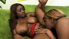 Big tit ebony lesbians go down on pussy and jam them with toys